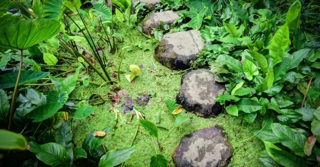 failure stepping stone